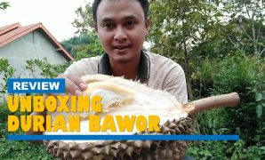 unboxing durian bawor